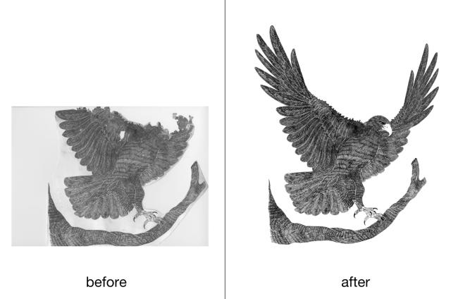 eagle_b_and_a